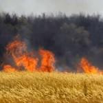 На Дніпропетровщині заборонили населенню відвідувати ліси та призупинили сезон полювання