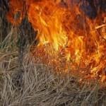 Спалювання сухостою — крок до пожежі.
